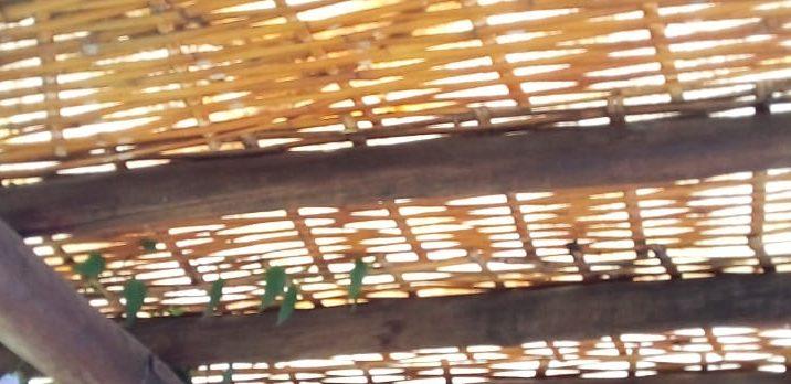Pergolado com bambu